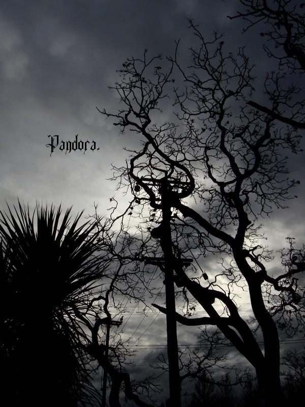 Mes débuts en photo : Dark Skies