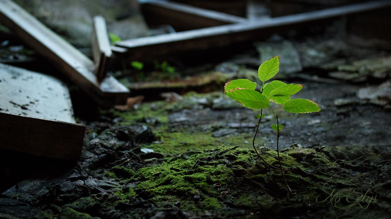 Urbex, renaissance de la nature par Nö Eelys photo, photographe alternative