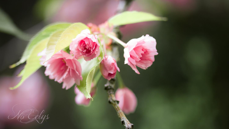 Macrophotographie fleurs roses No Eelys Photo