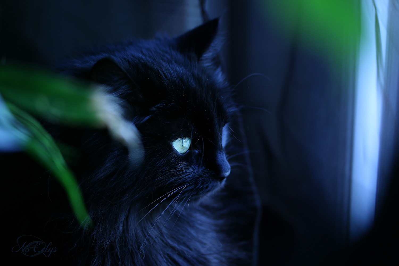 Chat noir mystère par Nö Eelys